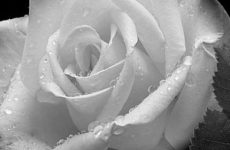 Т.Моррисон «Возлюбленная» (отзыв)